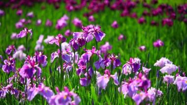 Il giardino dell'Iris da visitare con i bambini